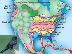 migratory map